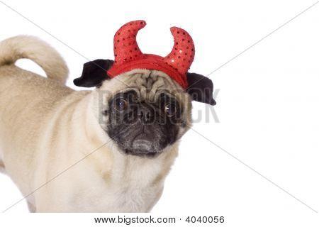Pug Devil Dog