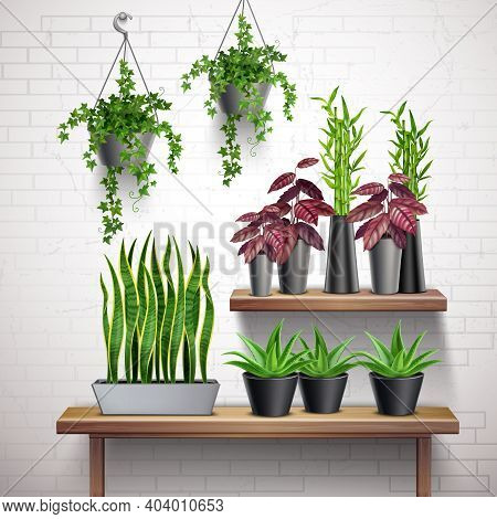 House Plants Realistic White Brick Wall Interior With Hanging Ivy Pots Succulents On Side Table Vect