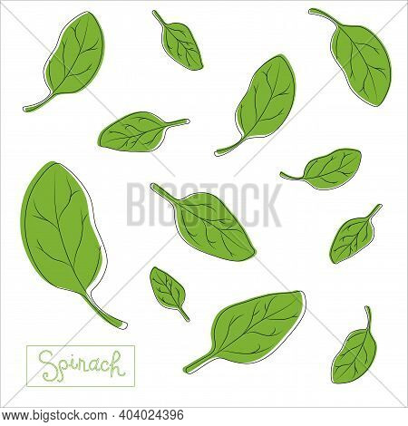 Spinach Leaves Of Different Shapes And Sizes With An Inscription. Seamless Pattern. The Concept Of H