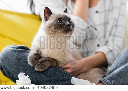 Selective Focus Of Cat Near Crumpled Paper Napkins And Allergic Woman On Blurred Background, Cropped