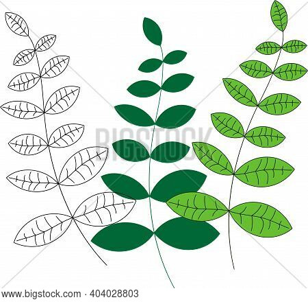 Botanical Color Set. Branches Of Trees With Different Color, Branch Line, Branch With Fill, Branch W