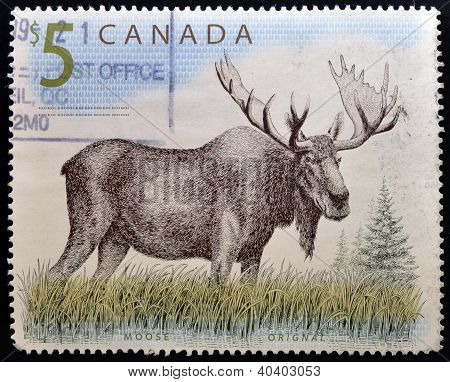 CANADA - CIRCA 1997: A stamp printed in Canada shows a Moose orignal circa 1997
