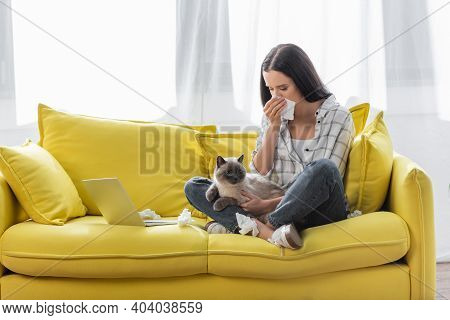 Allergic Woman Wiping Nose With Paper Napkin While Sitting On Sofa With Cat Near Laptop