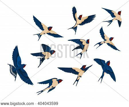 Flying Bird Various View Collection Set. Flock Of Swallows Isolated On White Background. Vector Illu