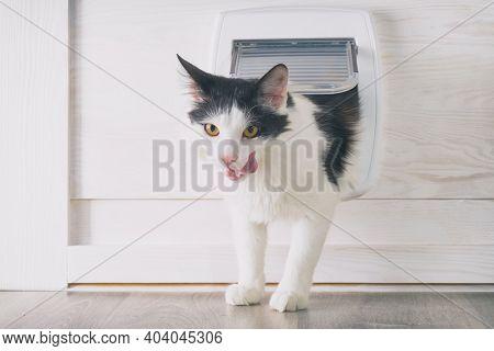 Cat passing through the cat door at home