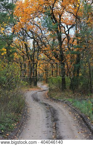 nice autumn road in forest. Take it in Ukraine