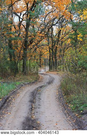 landscapw with autumn road in forest