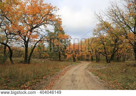 Landscape with rut road in autumn forest. Bright leafage on oak trees