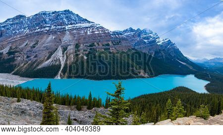 Turquoise Lake Peyto In Banff National Park, Canada. Mountain Lake As A Fox Head Is Popular Among To