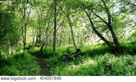Walking Trail And Bicycle On The Trail In Spring Forest . Trail For Cycling In The Woods. Walking Hi
