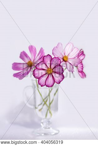 Summer Romantic Bouquet On A White Background. Cosmos Flowers In A Glass Vase. Vertical Crop.