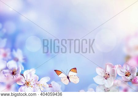 Blossom Tree Over Nature Background With Butterfly. Spring Flowers. Spring Background. Blurred Conce