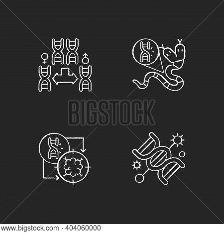 Dna Manipulation Chalk White Icons Set On Black Background. Chromosome Division. Genetic Mutation. G