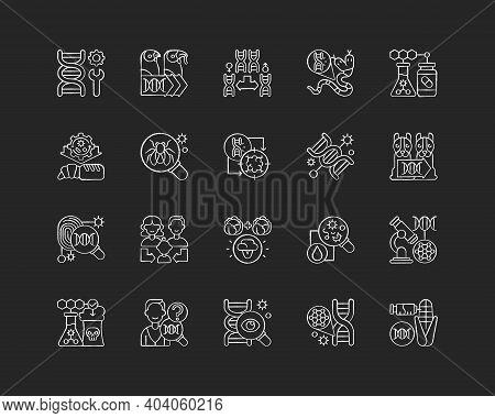 Genetic Engineering Chalk White Icons Set On Black Background. Chromosome Division. Animal Mutation.