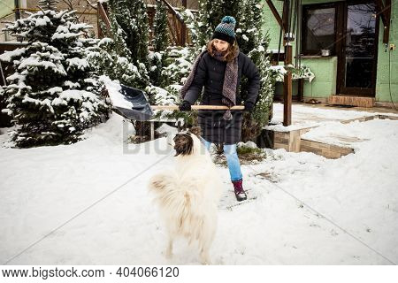 woman with shovel cleaning snow., white dog playing. Winter shoveling. Removing snow after blizzard