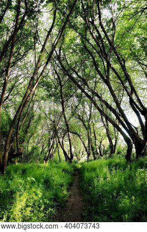 Walking Trail In The Spring Forest. Hiking Trail. Trail For Cycling In The Woods. Dense Thickets Of