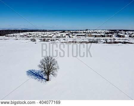 Aerial Top View Of A Tree In An Empty Field In Winter , Surrounded By With Snow. Kanata Neighborhood