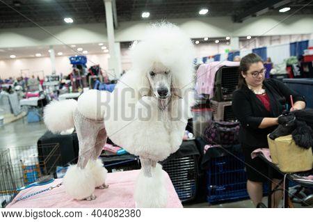 Novi, Michigan - Usa - January 17, 2020:  Michigan Winter Dog Classic Expo Day 1 Held At The Suburba