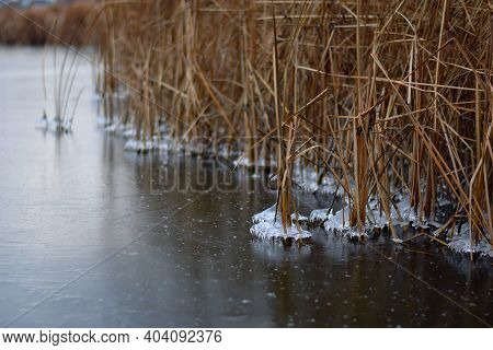 Ice On The River, Dried Reeds In Winter. The Last Spring Ice. End Of Winter, Beginning Of Spring. La