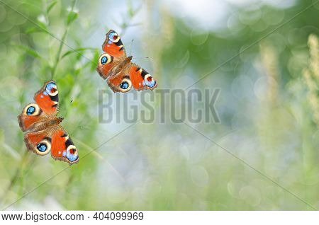 Unfocused Summer Background With Butterflies. Selective Focus