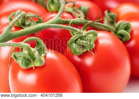 Tomato San Marzano Closeup For Homemade Tomato Sauce And Juice. Fresh Farm Elongated Tomatoes, Studi