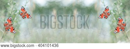 Unfocused Widescreen Summer Background With Butterflies. Selective Focus