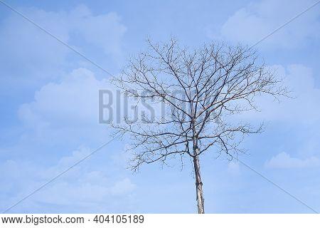 Dead Tree On Blue Sky For Assembly Patience, Drought, Poverty, Loss, Broken Heart, Heartbreak, New B