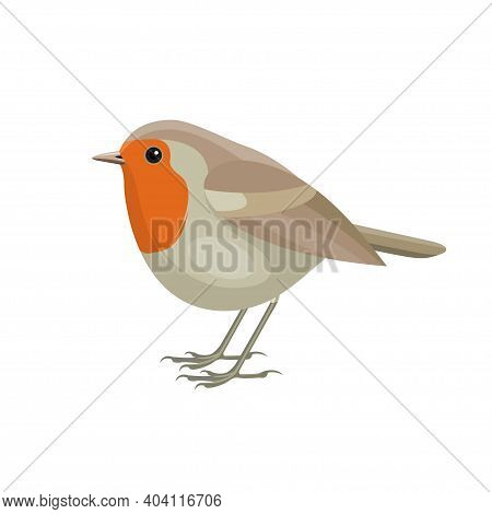 European Robin Bird, Known Simply As The Robin Or Robin Redbreast In Ireland And Britain. Flat Vecto