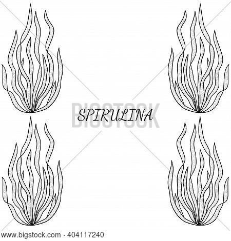 Collection Of Edible Seaweed: Laminaria, Macrocystis, Spirulina, Fucus, Kelp. Brown, Green Algae, Se