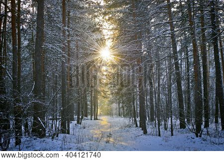 Winter Landscape With Snow And Fir Trees, Sunbeam And Sun. Christmas, New Year Background