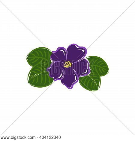 African Violet Flat Vector Botanical Illustration. Hand Drawing Of Exotic, Tropical Flower.