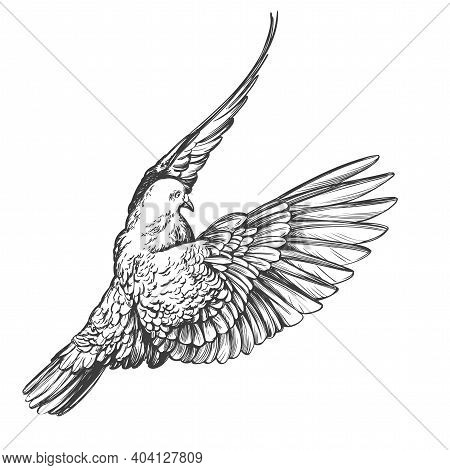 Dove Bird Is A Symbol Of Peace And Purity Hand Drawn Vector Illustration Realistic Sketch