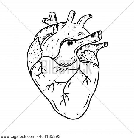 Heart Realistic Hand Draw Vector Illustration. Engraving Style. Black Color.