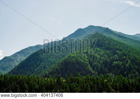 Green Hill Top Under Clear Blue Sky. Vivid Green Mountains Completely Covered By Forest In Sunny Day