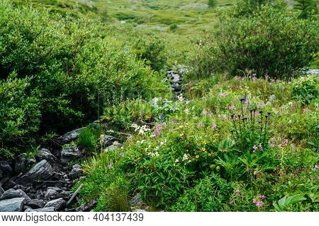 Vast Variety Of Herbs And Flowers Near Spring Water Among Stones. Mountain Clear Water Stream Near M