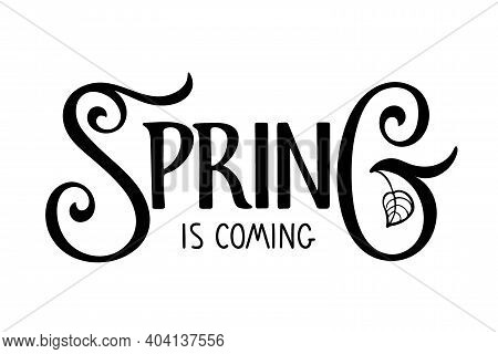 Spring Is Coming Hand Written Lettering With Leaf On White Background. Vector Spring Design Element