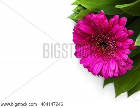 Bright Gerbera Flowers On A White Background