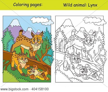 Vector Coloring Page With Cute Lynx In Mountain Area. Cartoon Isolated Colorful Illustration. Colori