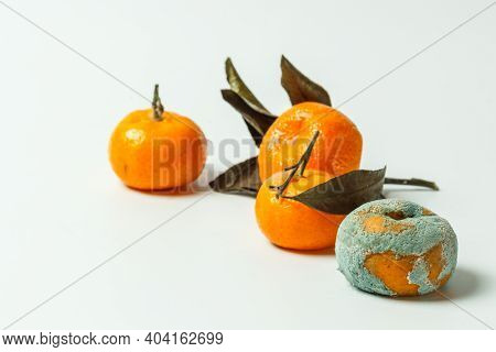 Spoiled Fruit. Tangerines With Varying Degrees Of Rot, Covered With Mold. On A White Background With
