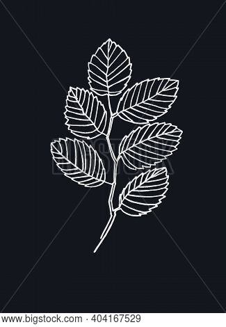 Elm Tree Branch Line Art. Realistic Hand Drawn Vector Illustration Of Elm. Isolated On Black Backgro