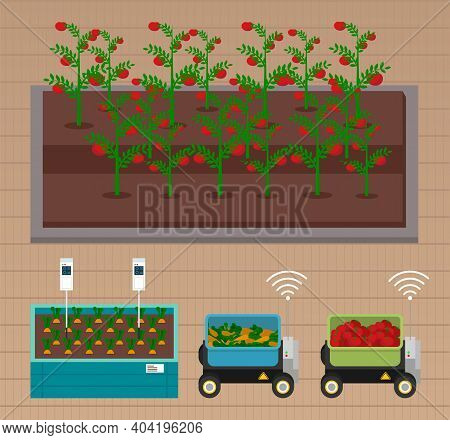 Smart Farming, Gardening Or Agriculture. Seedlings Planting To Garden Bed On Smart Farming. Growing