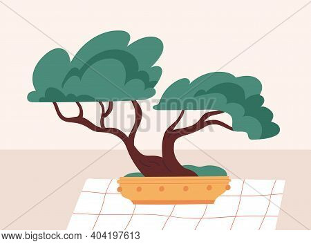 Bonsai Dwarf Tree With Miniature Crown And Trunk. Japanese Potted Plant. Traditional Chinese Botanic