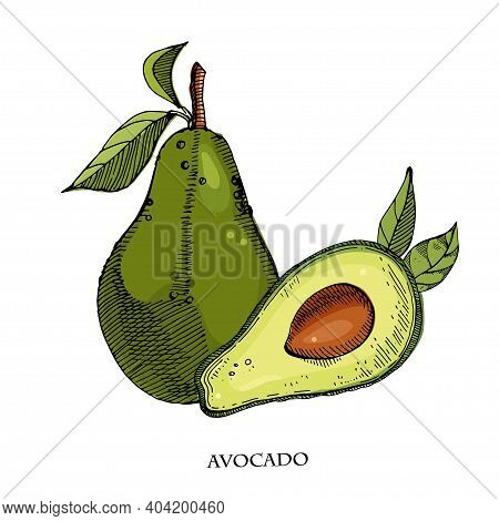 Avocado Hand Drawn Vector Illustration.detailed Engraving Style Sketch.tropical Summer Fruit, Isolat