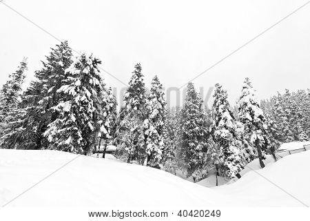 Dark And Misty Forest In Winter Landscape (black & White).