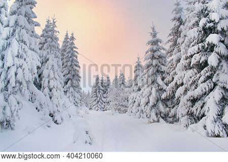 Beautiful Winter Snowy Forest And Hiking Trail