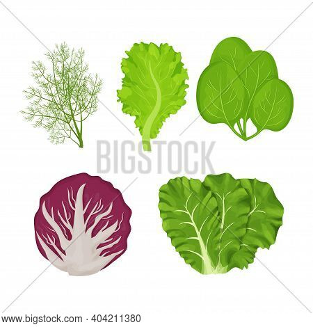 Fresh, Raw Leaves Of Salad In Cartoon Style Set. Dill, Lettuce, Romain, Spinach And Radicchio Isolat