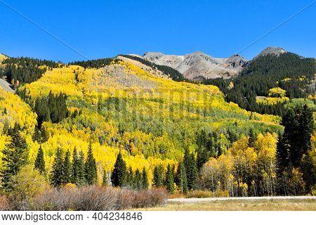 Aspens In The Fall On The San Juan Skyway In Colorado.