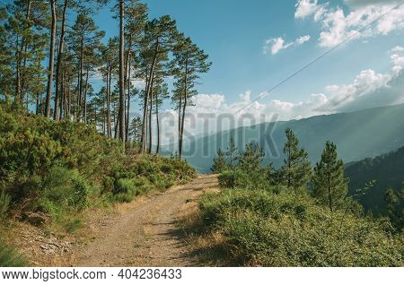 Dirt Road Passing Through Hilly Terrain With Trees At The Highlands Of Serra Da Estrela. The Highest