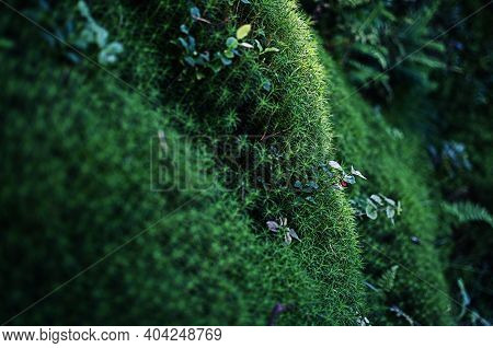 Very Close To Moss Growing Outdoors You Can Paint