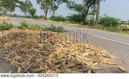 Halagere, Karnataka, India - November 6, 2013: Heap Of Finger Millet Seedheads Exposed On Asphalt Ro